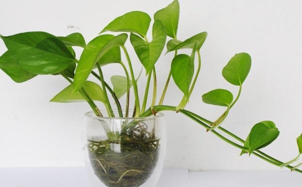 吸甲醛的植物有哪些?甲醛有什么检测方法?[图]