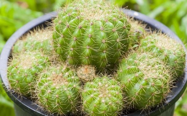什么植物防辐射最好?防辐射植物有哪些呢?[图]