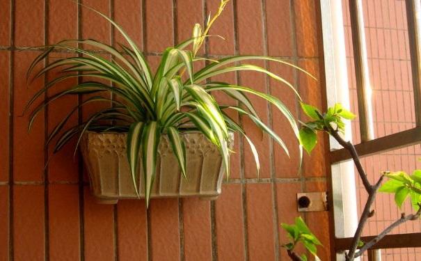 哪些植物可以美化家里的环境?室内放什么植物好?[图]
