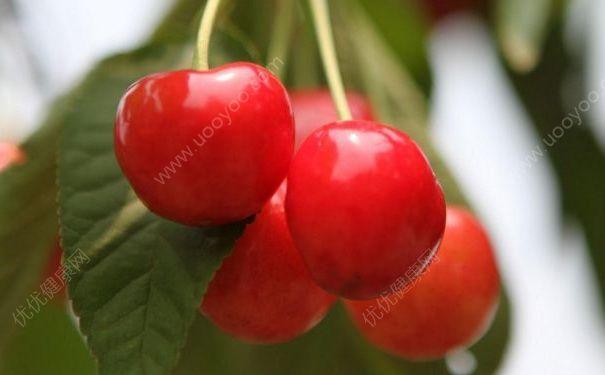 夏天有什么适合老人吃的食物?夏天什么食物适合老人吃?(3)