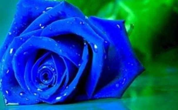 玫瑰花能入药吗?玫瑰花的药理有哪些?[图]