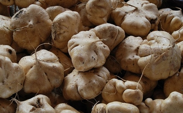 糖尿病患者能吃凉薯吗?糖尿病患者怎么吃凉薯最好呢?[